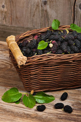 Basket of delicious black mulberries
