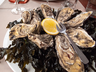 Oysters served in a restaurant
