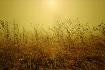 stick in the fog