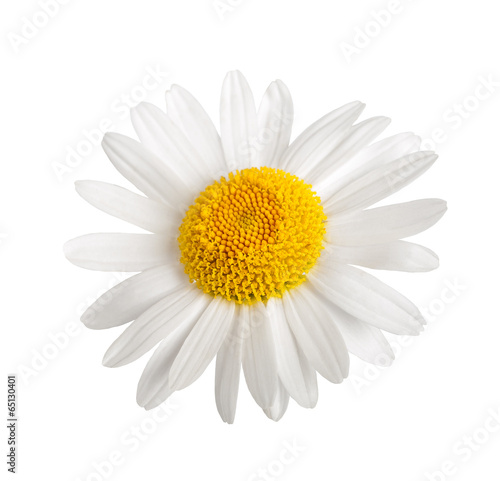 Foto op Canvas Madeliefjes White daisy