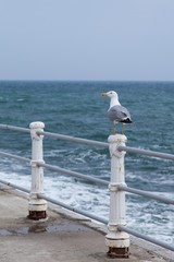 Seagull standing on a metal post