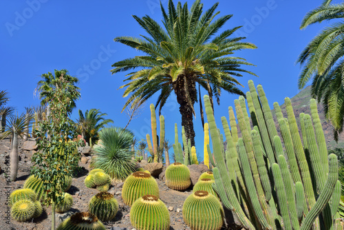 Foto op Canvas Cactus Cactus garden