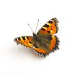 Leinwanddruck Bild - butterfly