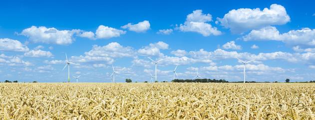 Windpark im Getreidefeld