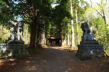 戸隠神社の参道