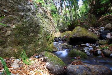 森林を流れる小川