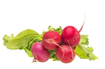 Bunch fresh radish