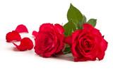 Fototapeta Zwei Rosenblüten und Blütenblätter