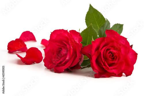 Fotobehang Rozen Zwei Rosenblüten und Blütenblätter