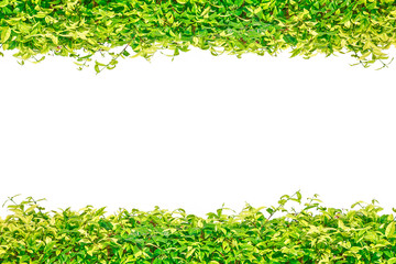 Green grass isolated border for background