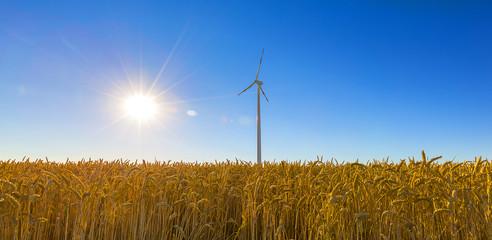 Getreidefeld mit Windrad im sommer