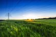 canvas print picture - Kornfeld im Sonnenuntergang mit Strommast