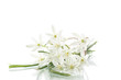 beautiful bouquet of white flowers