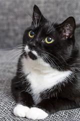 Schwarze katze auf dem sofa