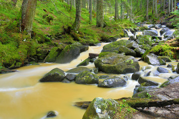 Yellow river in green forest