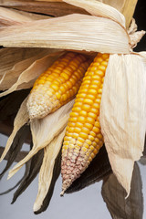 Corn, cob, yellow, decoration, still life, elegance