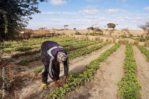 Fotobehang Overige homme cultivant potager (Afrique)