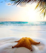 art caribbean beach in sunset time