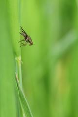 Moschino sul filo d'erba