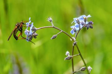 Insetto sui fiori