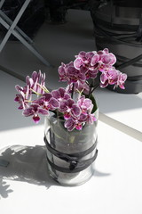 Orchids in a vase