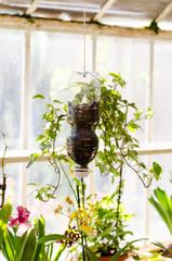 Plastic bottle for  plants growth