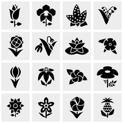 Flower vector icons set on gray