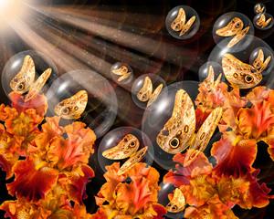 Bronze butterflies in crystal globes