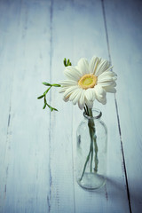 White gerbera flower in a vase on wooden background
