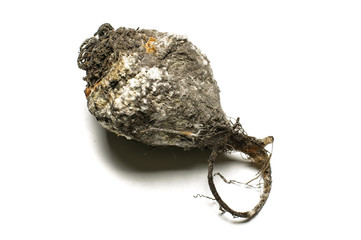 Rotten beet isolated on the white