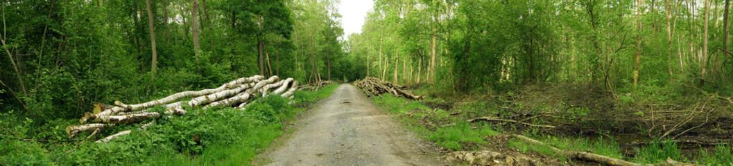 Birkenbaum Stamm gefällt