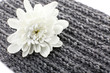 Beautiful flower on knitted fabric background