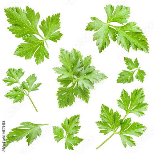 Parsley leaves isolated on white background, closeup - 65175453