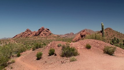 Types of Papago Park (Sonoran desert). Phoenix, Arizona, USA.