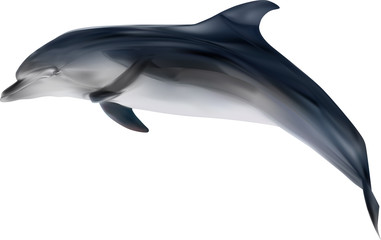 grey dolphin on white illustration