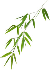 illustration with lush green bamboo foliage
