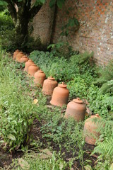 A Row of Terracotta Rhubarb Forcing Pots.