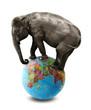 isolated elephant on globe