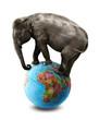 isolated elephant africa globe