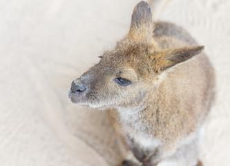 Female kangaroo from the top