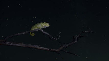 timelapse chameleon sleeping and moving stars