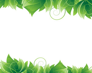 Lush foliage on white background