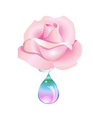 rosa goccia