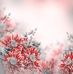 Bright spring chrysanthemum, floral background
