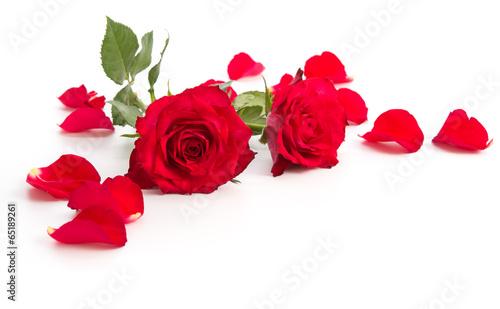 Zwei Rosenblüten und Blütenblätter
