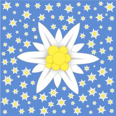 Ein großes Edelweiss und viele kleine auf blau