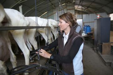 Breeder in barn ready for goat milking