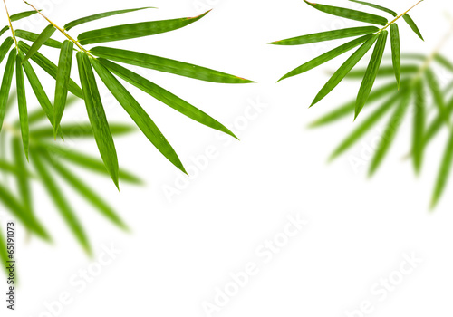 Staande foto Bamboo bamboo leaves isolated on white background