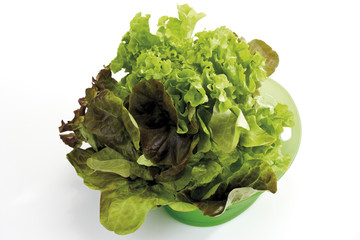 Red Oak Leaf Salat und Lollo Bianco Salat in Plastikschüssel,erhöhte Ansicht