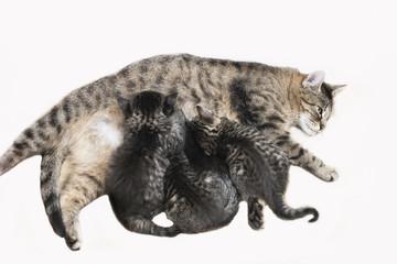 Hauskatzen,KatzenpflegeKätzchen,erhöhte Ansicht
